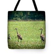 Sandhill Cranes And Friends Tote Bag