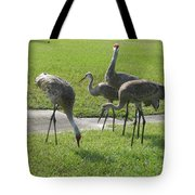 Sandhill Cranes Family Tote Bag by Zina Stromberg