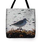 Sandpiper And Seaweed Tote Bag
