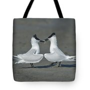 Sandwich Terns Tote Bag