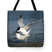 Sandwich Terns Mating Tote Bag