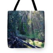 Santa Barbara Eucalyptus Forest II Tote Bag