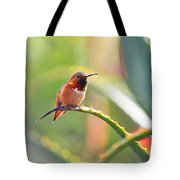 Santa Barbara Zoo Hummingbird Tote Bag