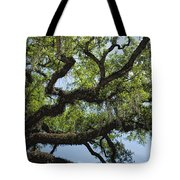 Savannah Live Oak And Spanish Moss Tote Bag