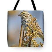 Savannah Sparrow  On A Reed Tote Bag