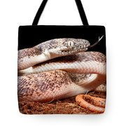 Savu Python In Defensive Posture Tote Bag