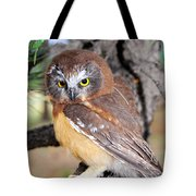 Saw-whet Owl In Conifers Tote Bag