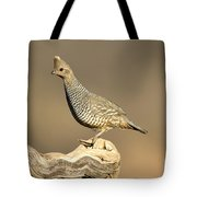 Scaled Quail Callipepla Squamata Tote Bag