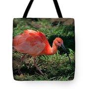 Scarlet Ibis Hybrid Tote Bag