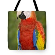 Scarlet Macaw Parrot Tote Bag