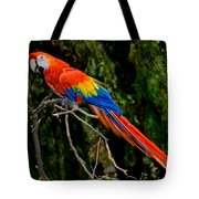 Scarlet Macaw Perched Tote Bag