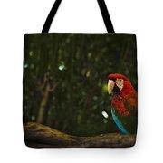 Scarlet Macaw Profile Tote Bag