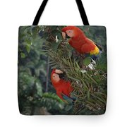 Scarlet Macaws In Rainforest Canopy Tote Bag