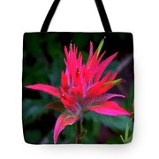 Scarlet Paintbrush On Swiftcurrent Pass Trail In Glacier National Park-montana Tote Bag