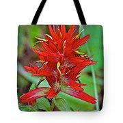 Scarlet Paintbrush On Trail To Swan Lake In Grand Teton National Park-wyoming- Tote Bag