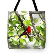 Scarlet Tanager - 11 Tote Bag