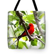 Scarlet Tanager - 19 Tote Bag