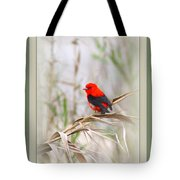 Scarlet Tanager 3630-10-ttp Tote Bag