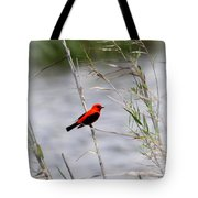 Scarlet Tanager - Coastal - Migration Tote Bag