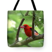 Scarlet Tanager - Fallout Tote Bag