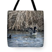 Scaup Show Off Tote Bag
