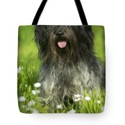 Schapendoes, Or Dutch Sheepdog Tote Bag
