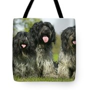 Schapendoes, Or Dutch Sheepdogs Tote Bag