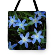 Scilla Flowers In The Morning Tote Bag