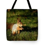 Sciurus Vulgaris In Evening Light Tote Bag