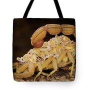 Scorpion Mother Carrying Her Brood Tote Bag