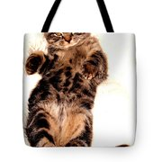 Scottish Fold On Back 1a Tote Bag