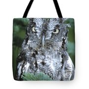 Screech Owl Straight On Tote Bag