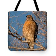 Screeching Red-shouldered Hawk Tote Bag