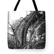 Sculpted Cypress Tote Bag