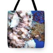 Sea Cucumbers 1 Tote Bag