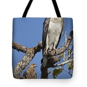 Sea Eagle And Brown Kite Sharing A Tree Tote Bag