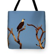 Sea-eagle And The Peewee Tote Bag