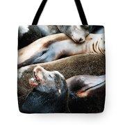 Sea Lion Dreams Tote Bag