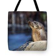 Sea Lion Resting Tote Bag