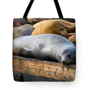 Sea Lions At Pier 39 In San Francisco Tote Bag