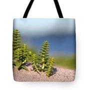 Sea Sandwort Tote Bag