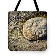 Sea Shell Rock Tote Bag