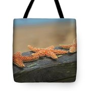 Sea Star Trio Tote Bag