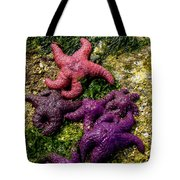 Sea Stars Tote Bag