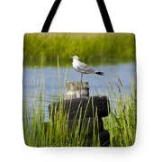 Seagull At Weeks Landing Tote Bag by Bill Cannon
