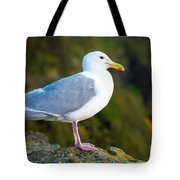 Seagull Heceta Head - Oregon Tote Bag
