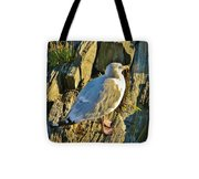 Seagull In Shadow Tote Bag