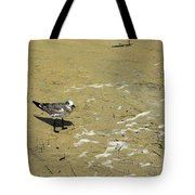 Seagull Scurry  Tote Bag