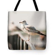 Seagull Standing On Rail Tote Bag