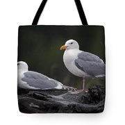 Seagulls Tote Bag by Gary Langley